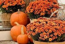 Celebrate - I Love Fall / Fall is a wonderful time of year.  These ideas make it more special.