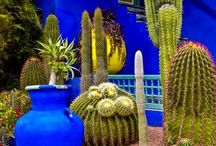 Moroccan & Italian Inspired Gardens / Ideas for my dream garden