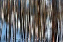 My Landscapes / Landscape photographs that I took