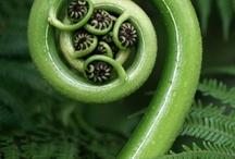 fruits 'n' veggies / by Tightwad Blog