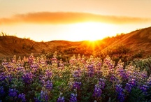 Nature's Beauty / by Karen ~