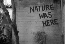Mural & Graffiti / by Jacqueline Burns-Walters