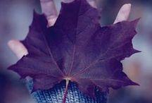 Autumn ♥ /