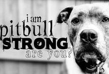 Pit Bull Awareness / by Jersey Animal Welfare Society