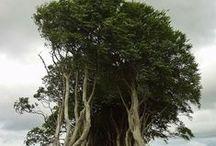 Nature/Trees