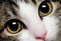 Animals/Cats