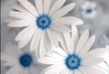 Nature/Flowers & Formal Gardens