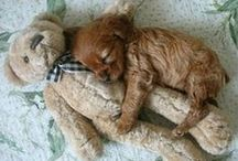 Animals/Dogs