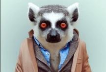 Animals/Meerkats & Lemurs
