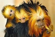 Animals/Monkeys
