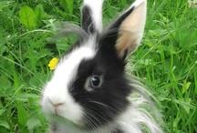 Animals/Rabbits