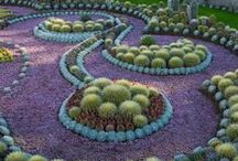 Nature/Cacti & Mushrooms