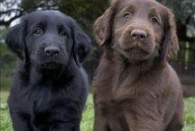 Doggone Dogs~11* / by Stacy G. F.