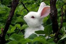 Remarkable Rabbits / A collection of rabbits for all you bunny huggers!