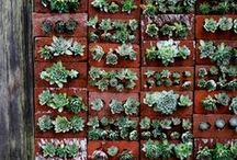 Plant it - vertical gardens