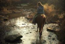 equestrian info / Colors, genetics, conformation...