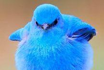 Birds, Birdhouses & Feeders