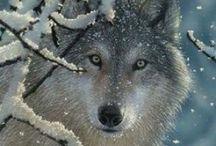 Wolfy wolfy