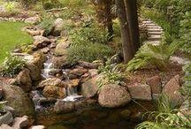 Backyard Zen Shade Garden