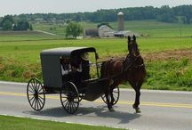 Amish Recipes / by Lisa Heath
