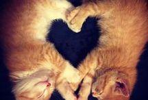 lindos gatos e ideias / Sobre gatinhos fofos e piadas de gato