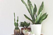 Bouquets & Botanicals / flowers, gardens, gardening, herbs, bouquets