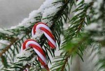 Christmas / by Noemi