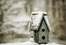 Bird Houses / These are just so cute!