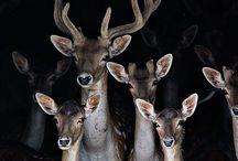 Jumanji / Animal photography