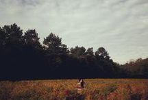 Autumn / by PrettyWit