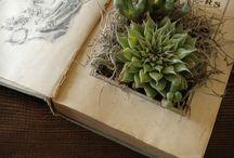Succulents / by Christina Schwabecher