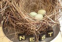 NEST & EGGS / nest and eggs
