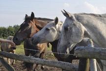 Glueck-auf-Pferden.de
