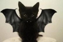 Halloween~ / by Tanya Surak