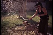 bull terrier / by Alicia Trejo