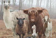 Feathered Furry Winged beauties / by ƈąཞɛყ