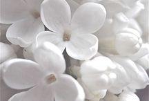 White is White / by ƈąཞɛყ