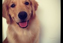 .dogs. / Cute dogs