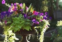 home - garden / by Jessica Clayton