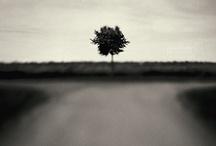 | trees |