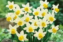 seasons - spring.