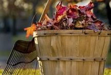 Autumn gardening ideas