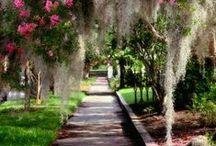 Carolina / South Carolina Photography & History / by Kelly Conway
