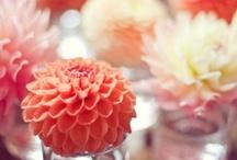 floral pretties