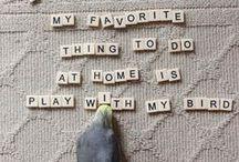Birds & Corgis / by Meredith Burke