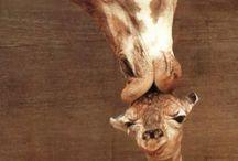 Animales / by Carla León V