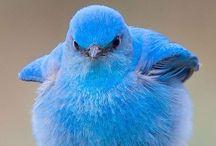 Aves - Naturaleza / Aves