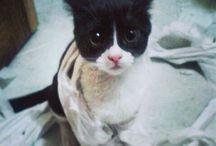 Gatos - felinos / Felinos - Naturaleza