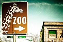 Zoos I want to visit / by Vicki Aubele