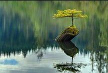 Trees / by Jackie Brown